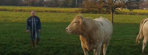 Vente directe de viande bovine